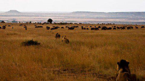 Рассказ о поездке в Кению. Сафари и кайтсерфинг.